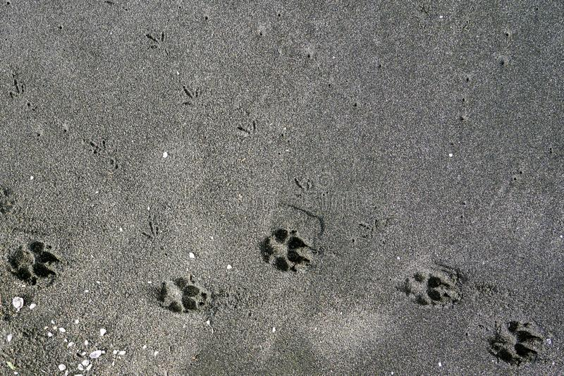 Traces et coquilles animales dans le sable au bord de la mer, plage noire de sable - la Mer Noire, la Géorgie, beau fond photos stock