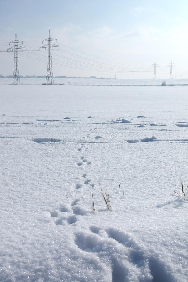 Free Traces Of A Hare On A Snow Royalty Free Stock Photo - 12861315
