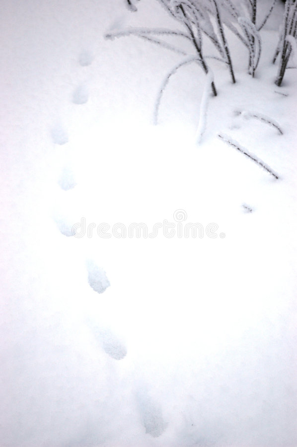 Free Traces On Snow Stock Images - 4834504