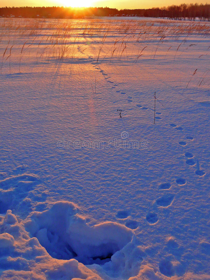 Traces on snow stock image