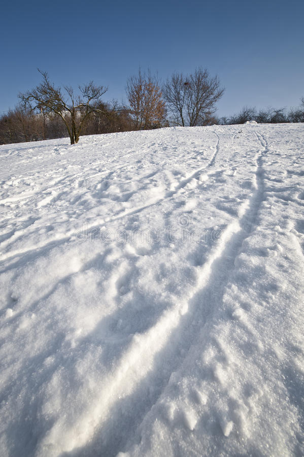 Download Traces On The Snow During Winter Time Stock Photo - Image: 19876354