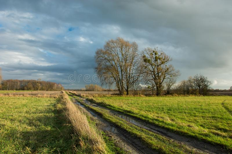 Traces of wheels and puddles on a dirt road through a green meadow, large trees and rainy clouds in the sky. Traces of wheels and puddles on a dirt road through stock images
