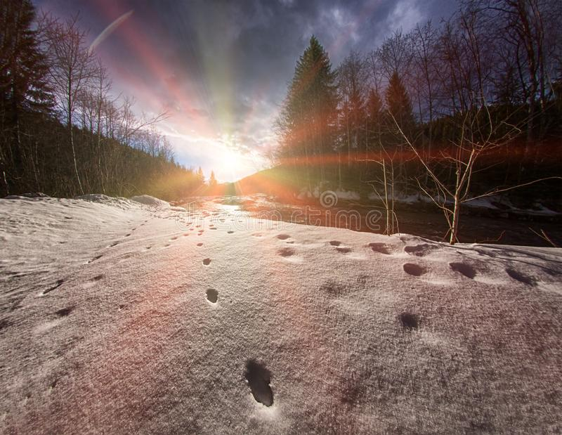 Traces of wild animals on snow near river royalty free stock photography
