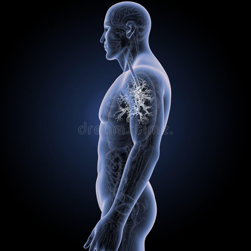 Ungewöhnlich Anatomie Und Physiologie Körper Fotos - Anatomie und ...