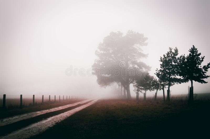 A track along an avenue of trees on a foggy winters day with an atmospheric, moody edit. stock images