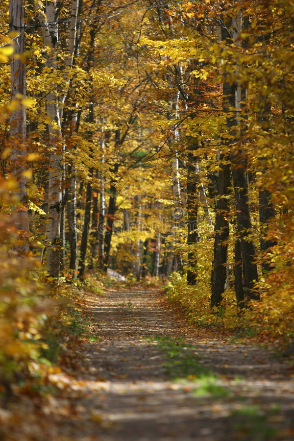 Track through autumn forest stock image