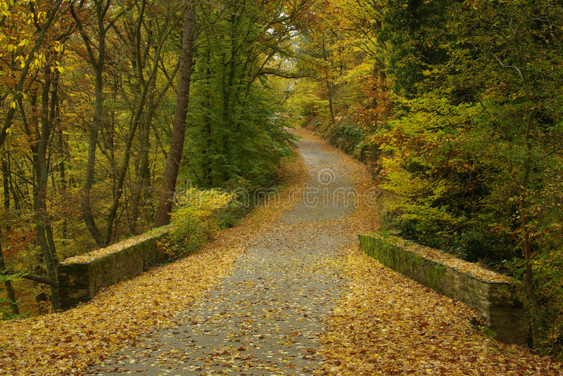 Track in autumn forest stock images