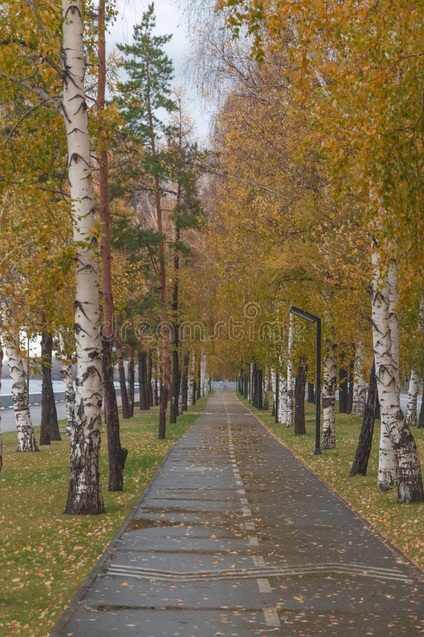 Track in the autumn park royalty free stock photography