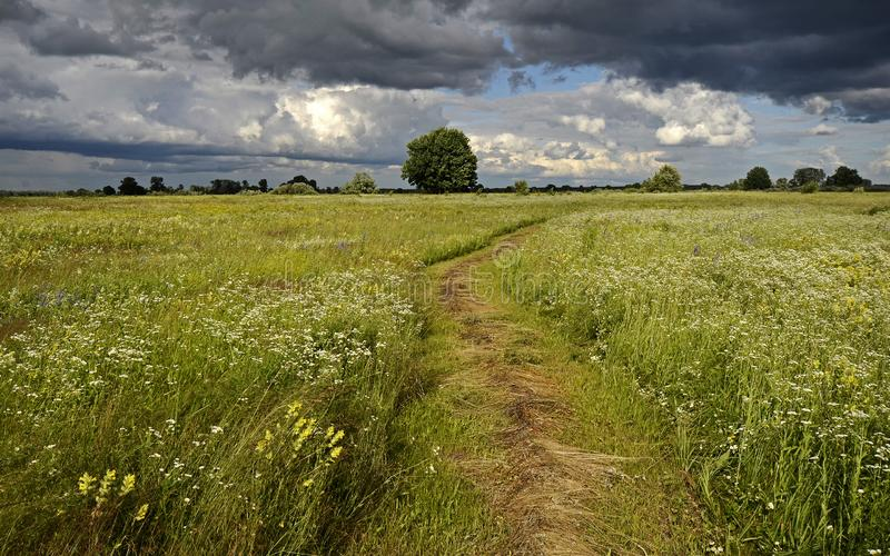 Track on the flowering meadow. Summer. Haymaking royalty free stock photography