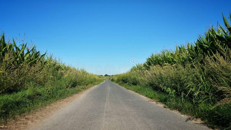 Track between huge corn fields stock photo