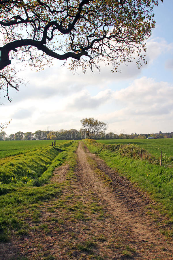 Track through meadow fields royalty free stock images