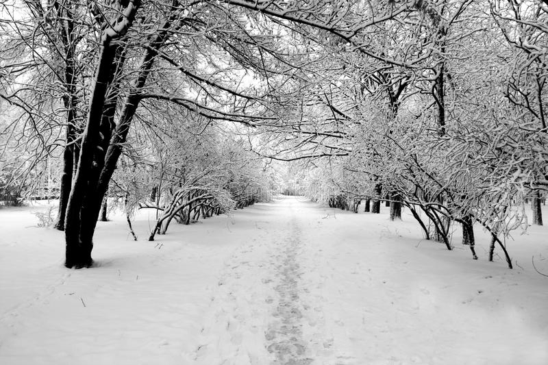 Download Track in park at winter stock image. Image of texture - 10721137