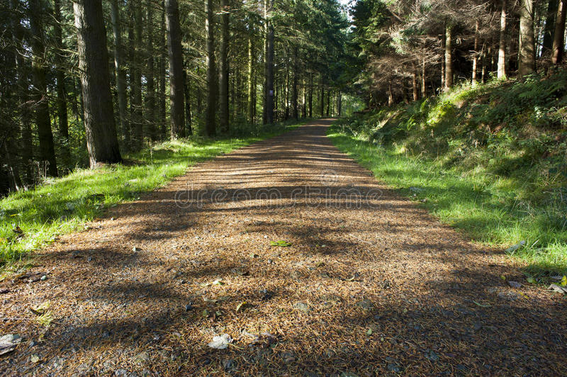 A Track Through A Pine Forest Stock Image  Image Of
