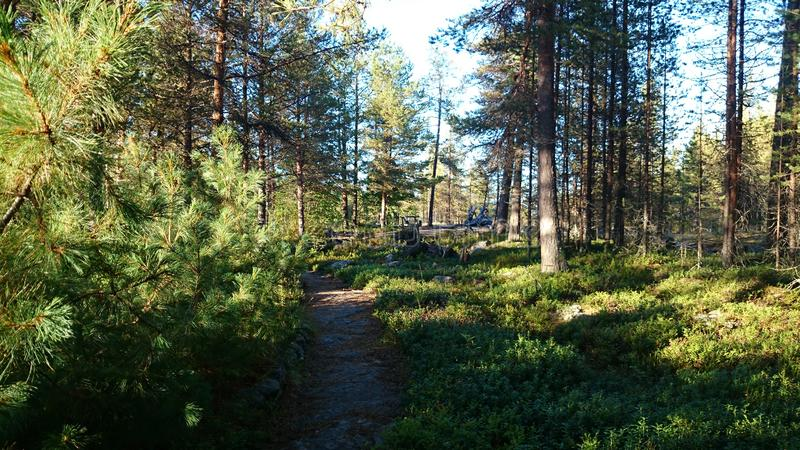 Track in a pine forest stock images