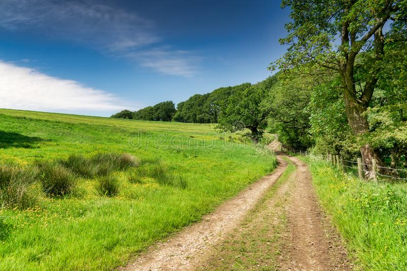 A track running alongside a meadow and woodland. stock image