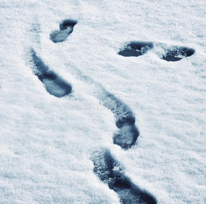 Track shoes in melting snow. Abstract background track shoes in melting snow royalty free stock photo