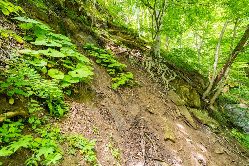 Track on a steep slope of the mountain1 royalty free stock image
