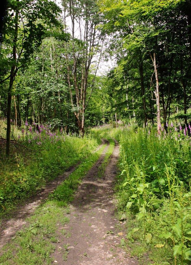 Track though English Woodland