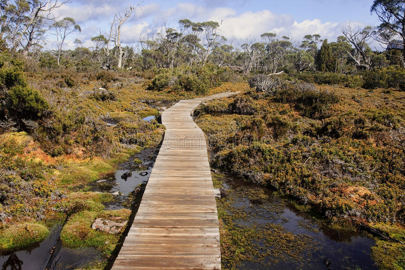 Track in Walls of Jerusalem - Tasmania (Australia). View Track in Walls of Jerusalem - Tasmania (Australia royalty free stock photography