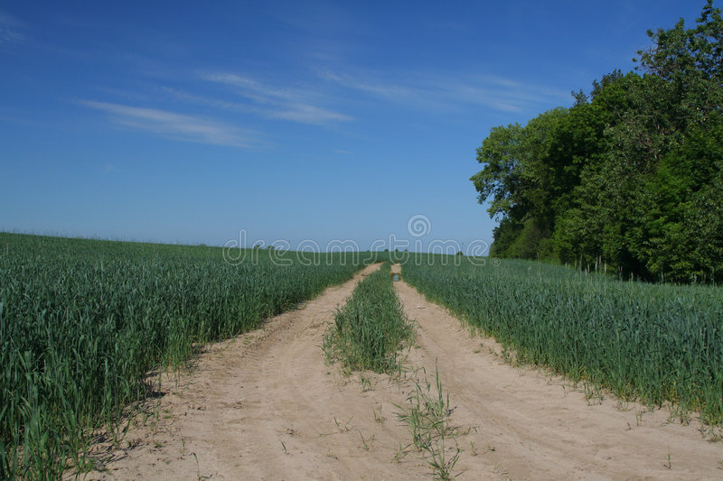 Track In Young Wheat #2 Royalty Free Stock Photography