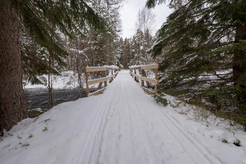 Tracks for crosscountry skiing in a swedish forest february 2018. With fir trees on the side stock images
