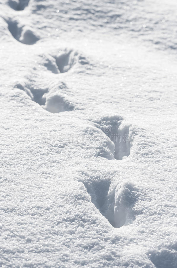 Tracks in deep snow royalty free stock photos