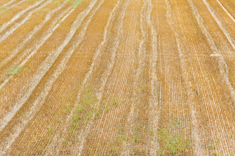 Download Tracks on a field stock photo. Image of landscape, harvest - 26295808