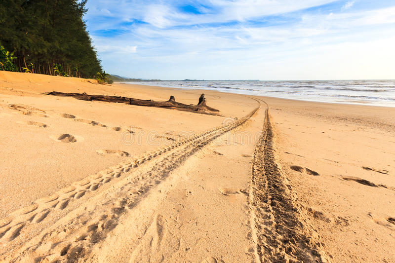 Download Tracks on the golden sand stock photo. Image of outdoor - 32358038