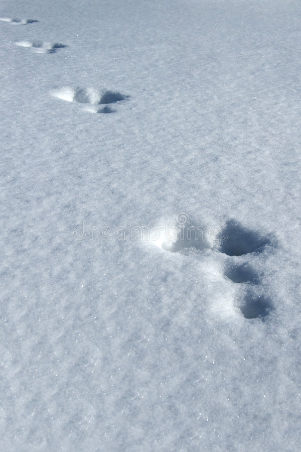 Tracks in the snow royalty free stock photography
