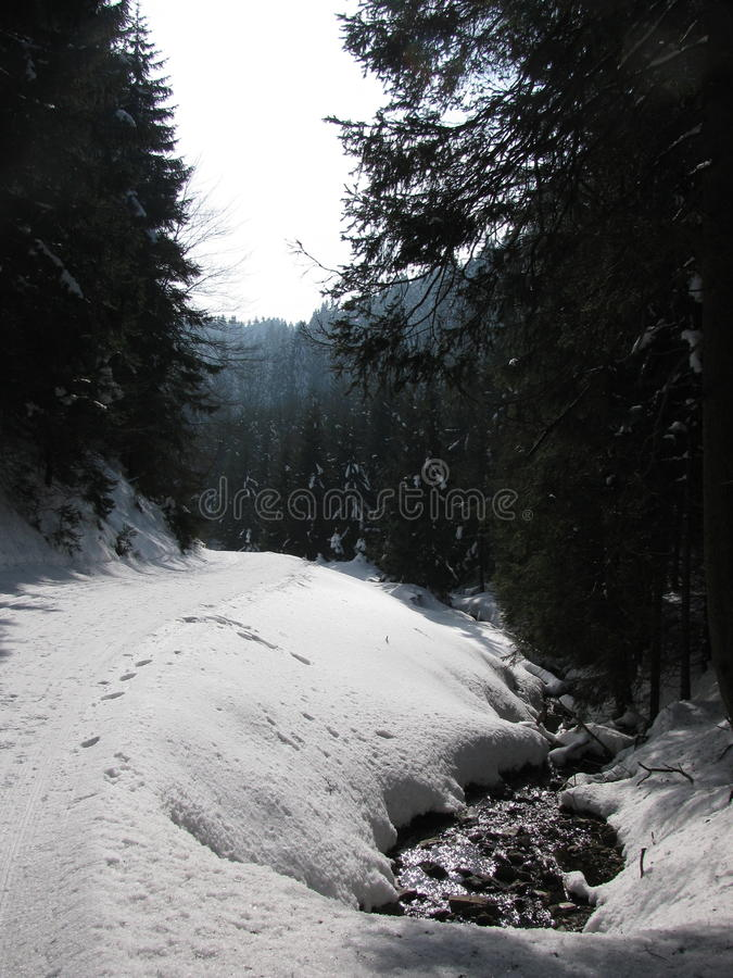 Tracks in the snow in winter forest stock photography