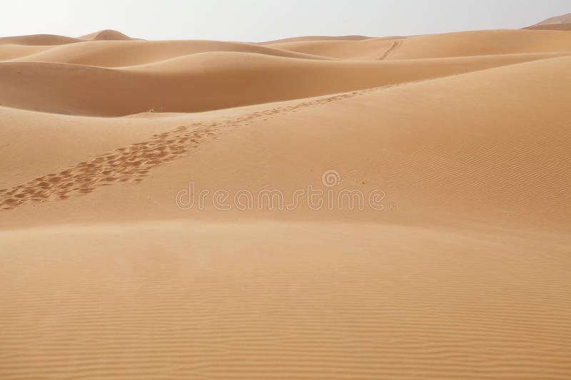 Download A Trackway On The Desert Sand Stock Photo - Image: 26810318