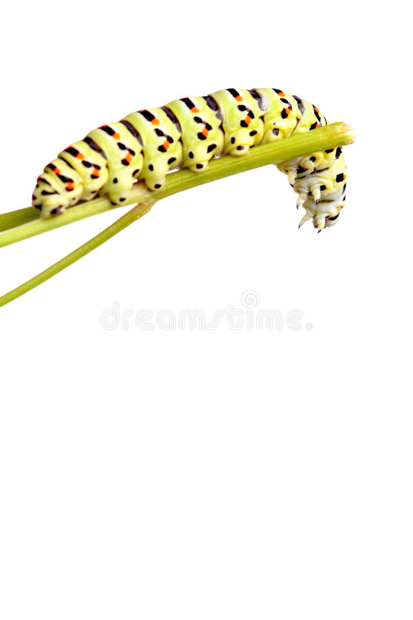 Tracteur à chenilles vert de swallowtail image stock