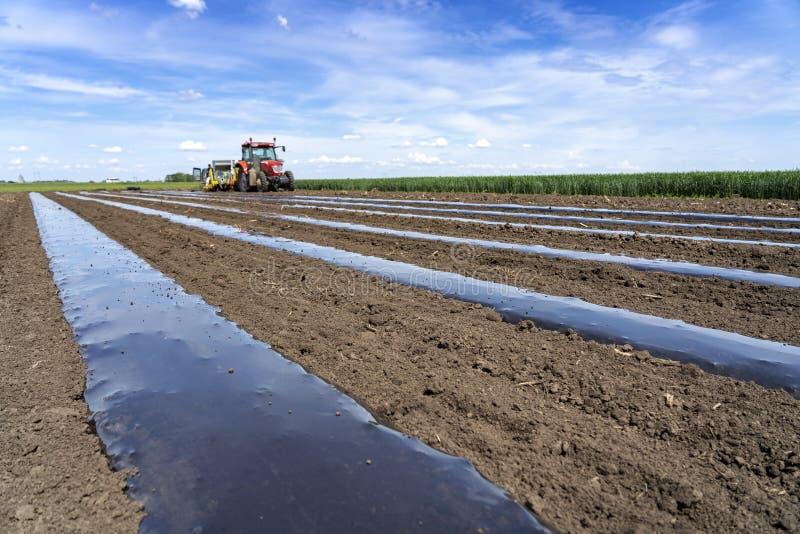 Tracteur dans un domaine ?tendant le lit en plastique de paillis pour la production v?g?tale images stock