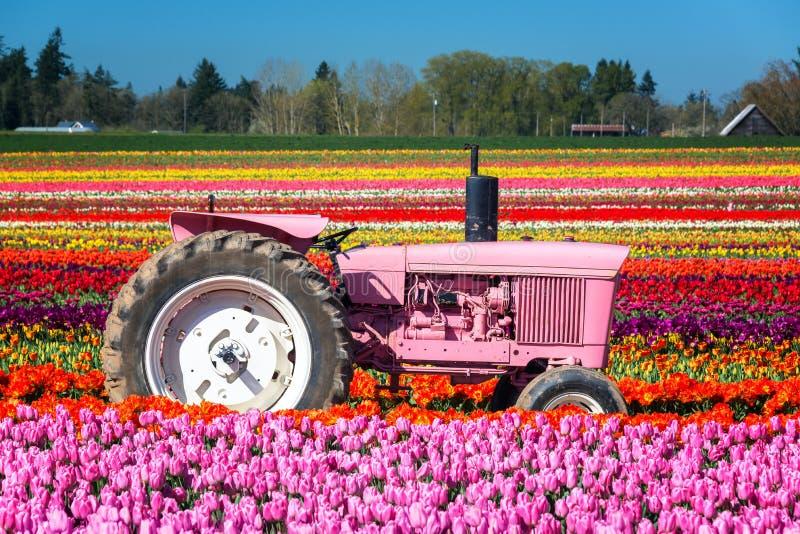 Tracteur et tulipes roses photographie stock