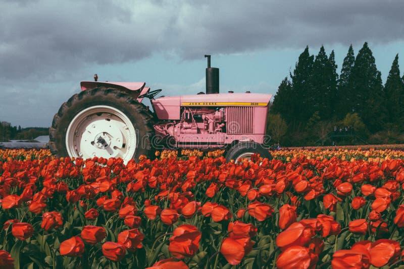 Tracteur rose dans un domaine complètement de belles tulipes colorées photo libre de droits