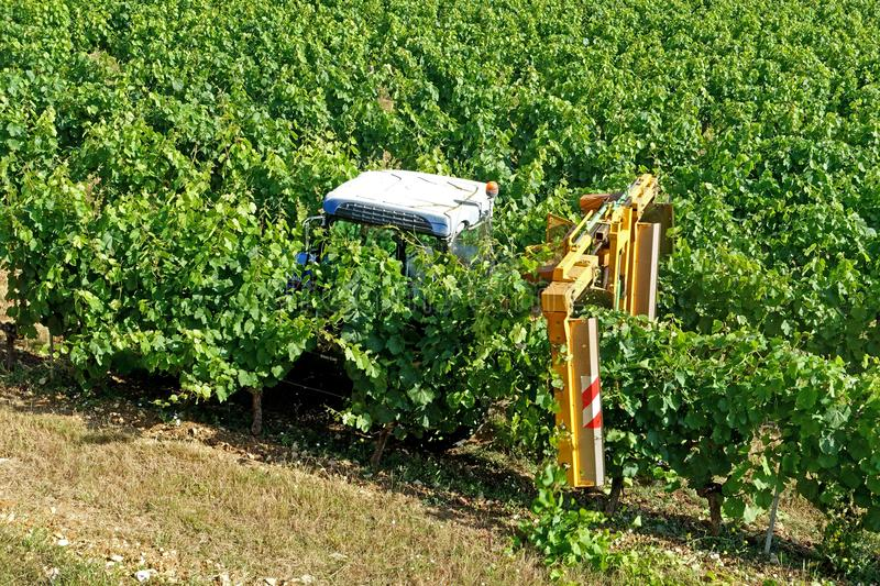 Tractor being used to prune the grape vines royalty free stock photo