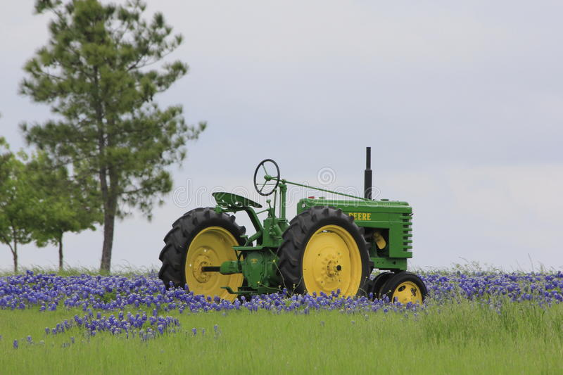 Tractor in bluebonnets royalty free stock photo