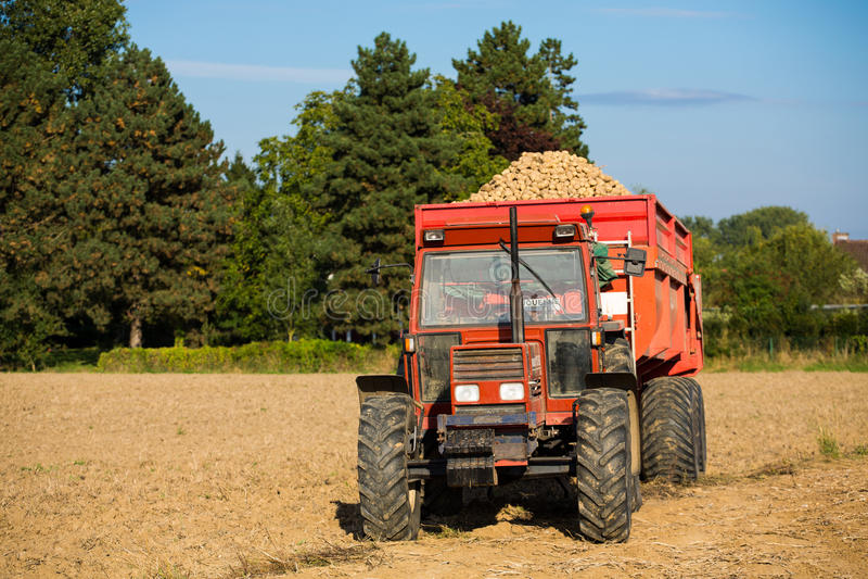 Tractor con una descarga llena de patatas imagenes de archivo