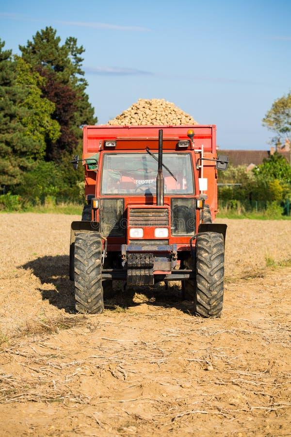 Tractor con una descarga llena de patatas fotos de archivo libres de regalías