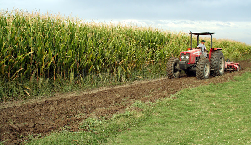 Tractor with Corn (Maize) royalty free stock image