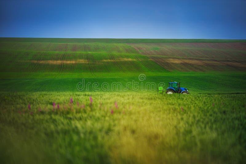 Tractor de cultivo que ara y que roc?a en campo de trigo verde fotos de archivo