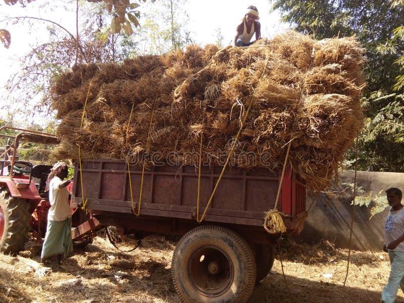 Tractor de Strow fotos de archivo