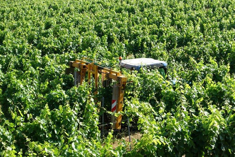 Tractor die wordt gebruikt om de wijnstokken te snoeien stock foto's