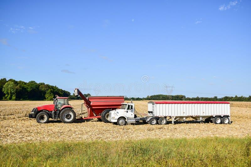 Tractor die zijn lading van geoogst graan leegmaken stock foto