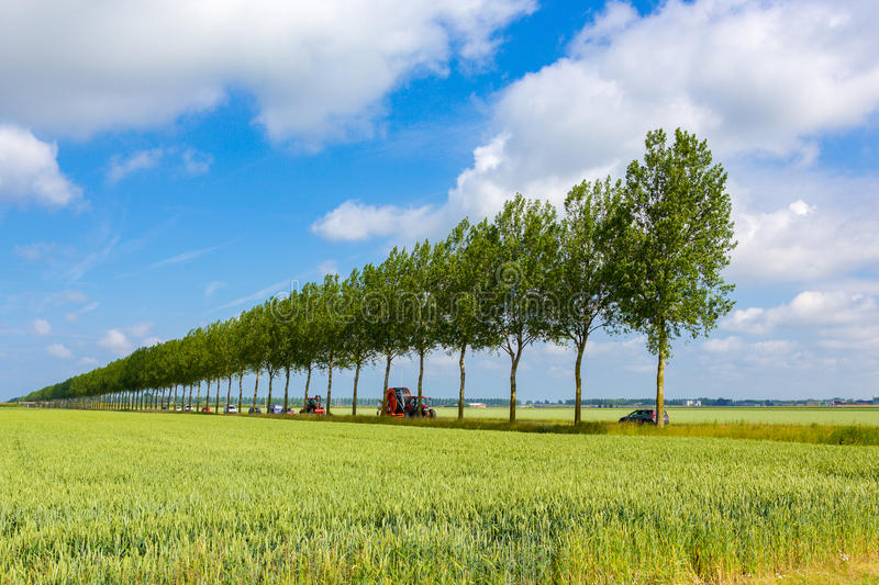 A tractor driving along a straight line with trees. A tractor driving along a straight line with trees close to New Vennep in the Netherlands stock photo