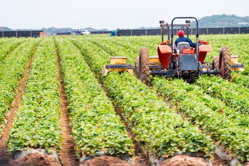 Tractor en la acción, ambiente agrícola imágenes de archivo libres de regalías