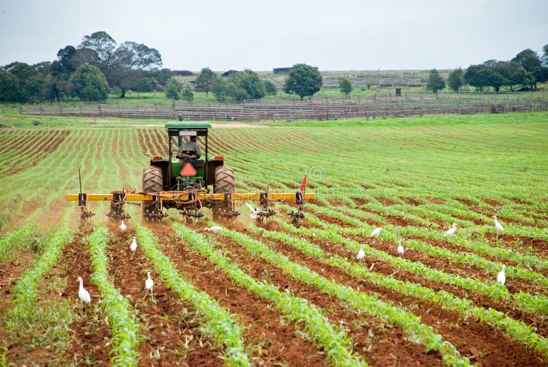 Tractor en ploeg stock afbeeldingen