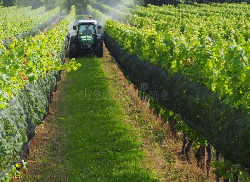 Tractor entre los viñedos en el medio del verano foto de archivo libre de regalías