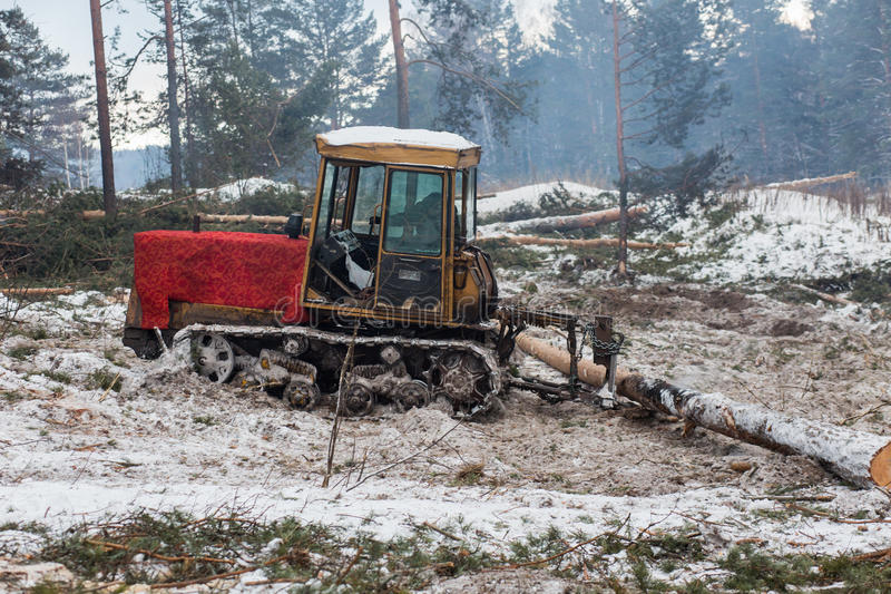 Tractor for export of timber logs. Unload them stock image