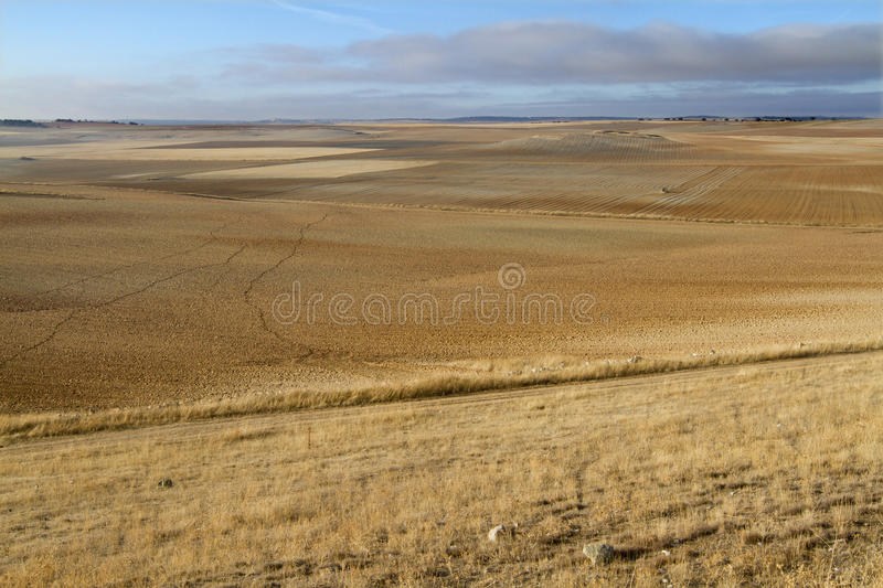 Download Tractor - field stock image. Image of machinery, straw - 26543367